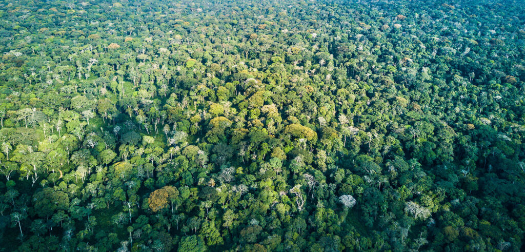 Ndzehi Concession and Marantaceae Forest-Scott Ramsay