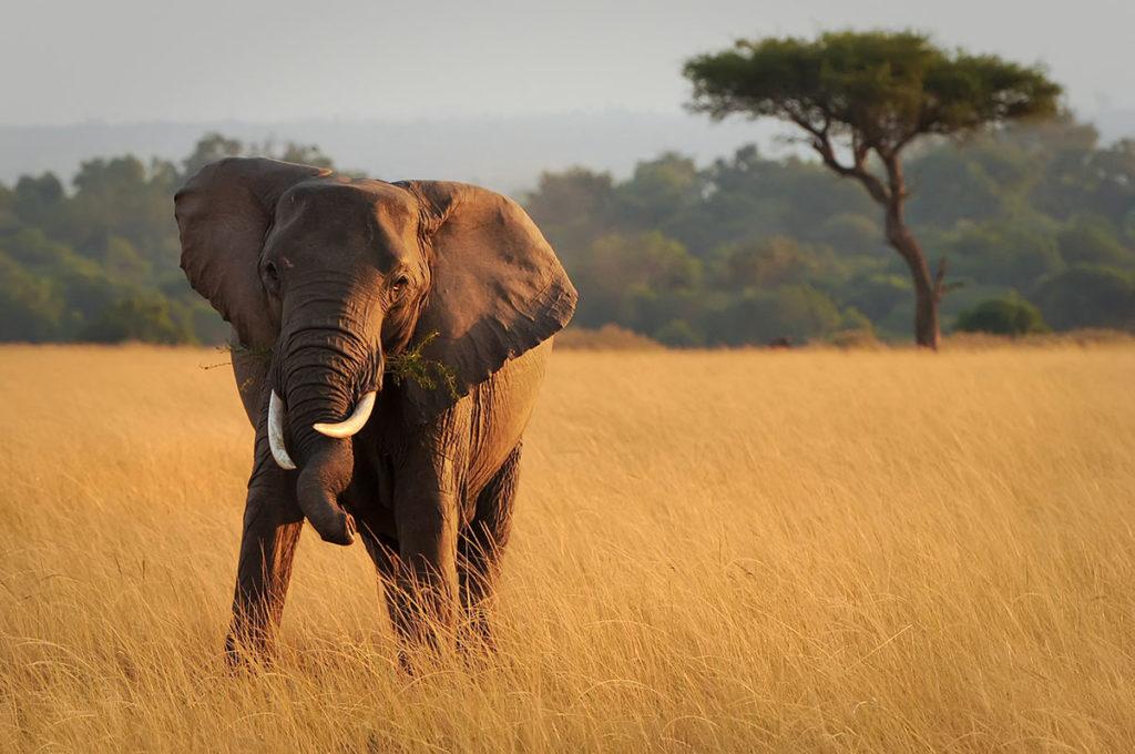 Masai Mara, Kenya, by Amy Nichole Harris, Shutterstock (Travel Africa magazine)